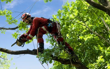find trusted rated Wales tree surgeons
