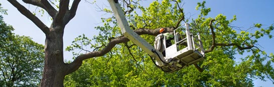 Wales tree surgery services