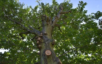 what is Wales tree surgery?